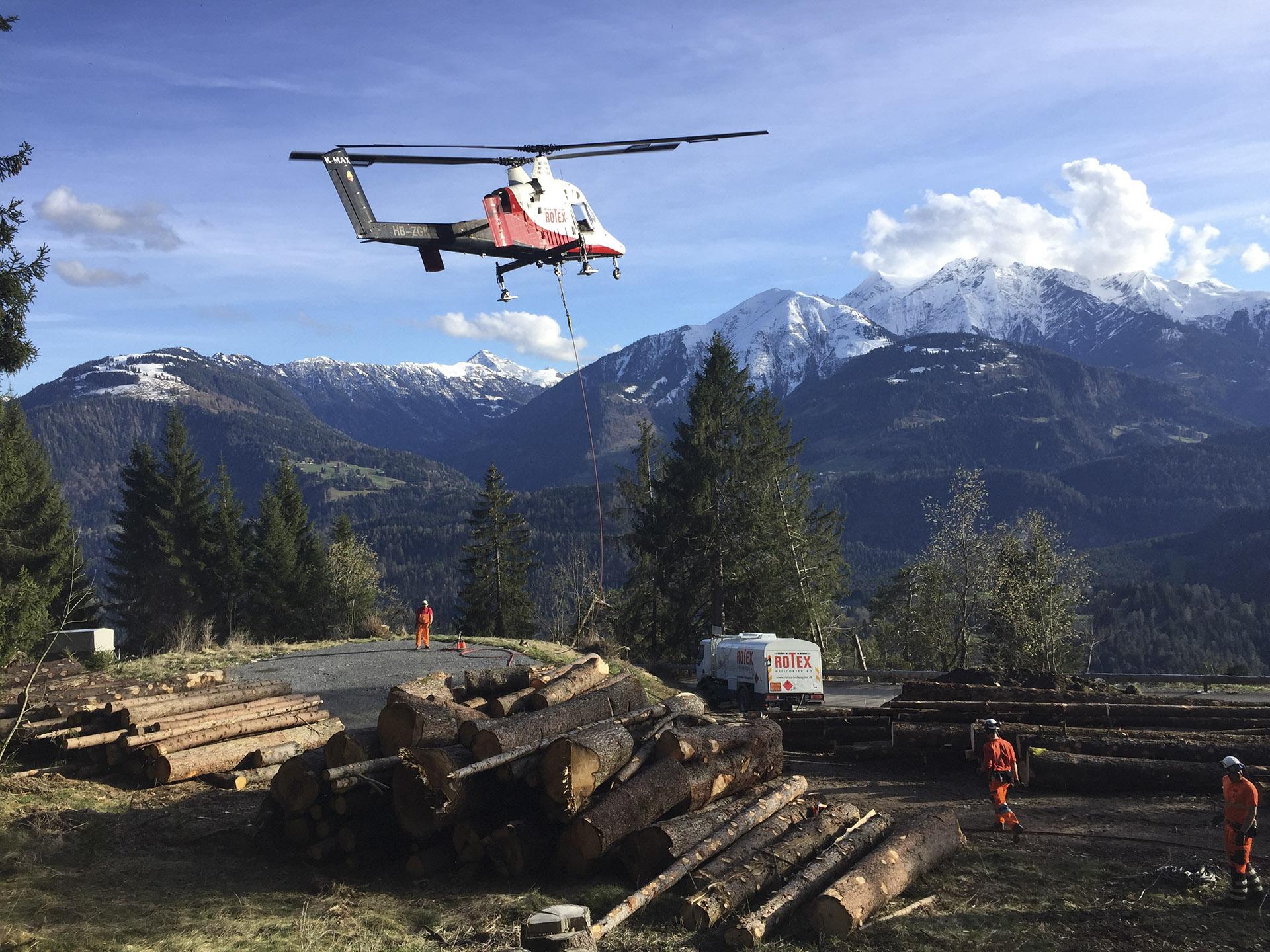 Ausflug Holz Borkenkäfer