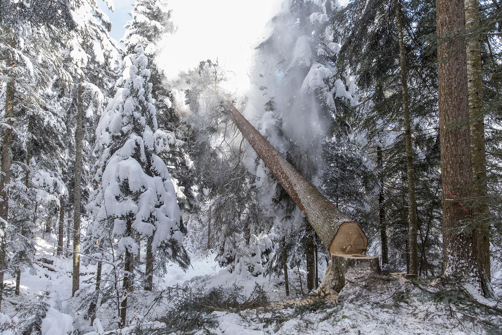 Holzschlag Prau Sura