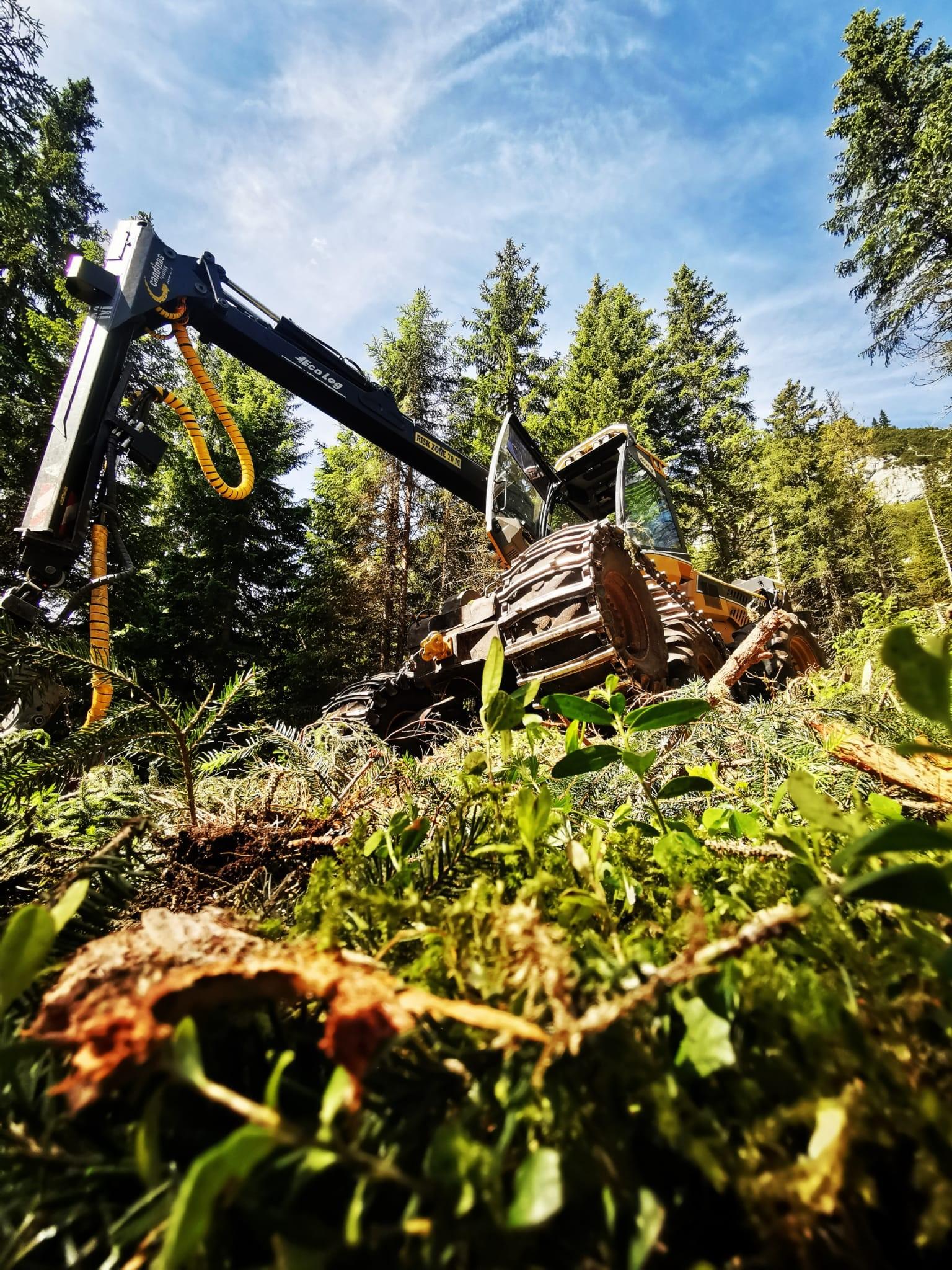Holzschlag – Tarschlims Sommer 2021