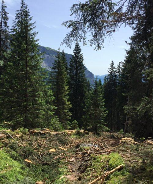 Bild Holzschlag 2